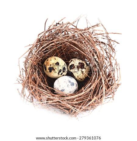 Bird nest and egg isolated on white background - stock photo
