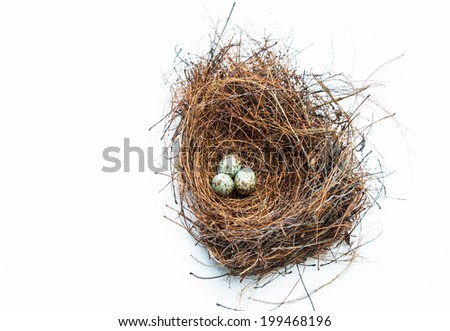Bird nest and eggs on white background - stock photo