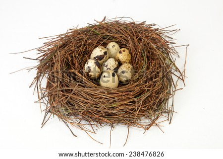 Bird nest made of pine tree needles with quail eggs. Isolated over white background - stock photo