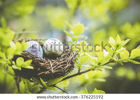Bird nest on branch with easter eggs for Easter - stock photo
