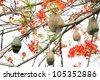 bird nest on flame tree. - stock photo
