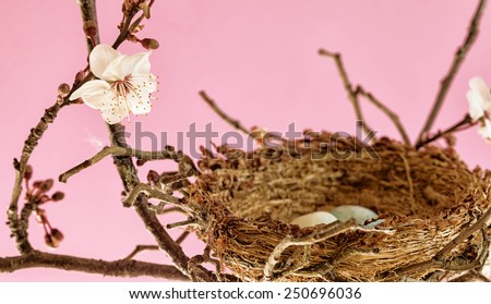 Bird nest with eggs in a flowering tree. Close up with selective focus. Pink background. Vintage color. Easter concept. - stock photo