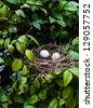 bird net on tree - stock photo