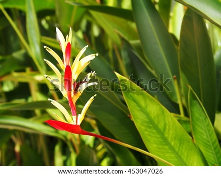 bird of paradise, colorful exotic tropical flower in nature under sunlight and nice green environment background - stock photo