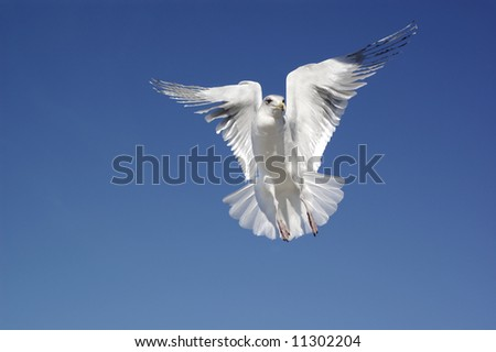 Bird of Peace - stock photo