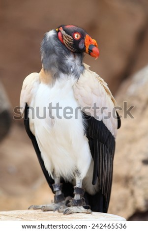 Bird of prey. - stock photo