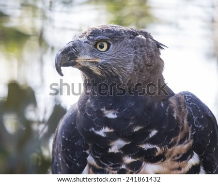 Bird of Prey head shot - stock photo