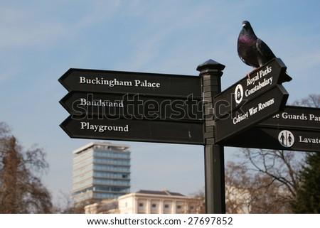 Bird on a tourist signpost in London - stock photo