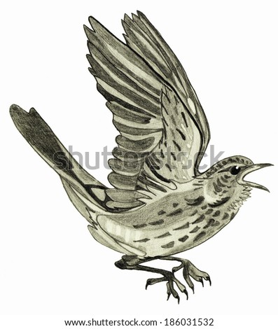 bird on a white background - stock photo