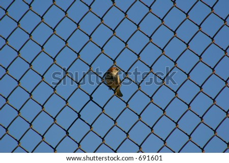 Bird on a Wire Fence