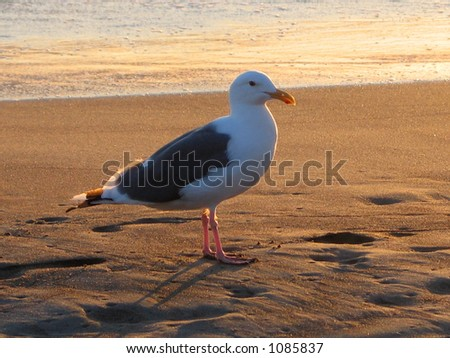 Bird on Beach - stock photo
