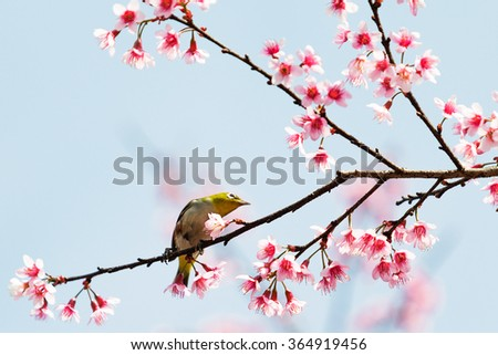 bird on cherry blossom branch - stock photo