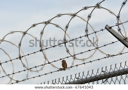 Bird on Security Fence - stock photo