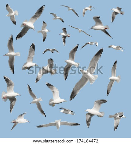 bird on sky background - stock photo
