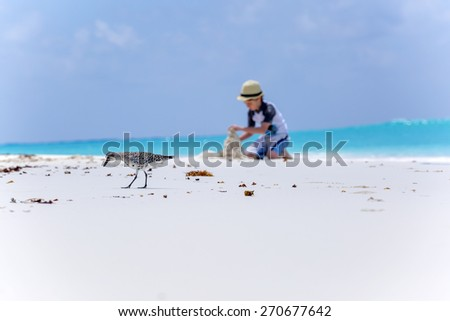 Bird on the beach and boy making sand castles in the background - stock photo