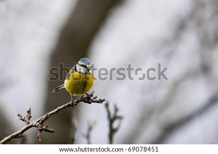 bird on the tree - stock photo
