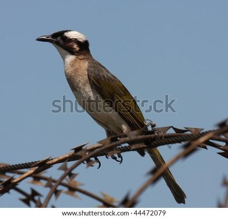 bird on the wire - stock photo