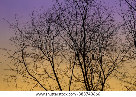 bird on tree branches with twilight - stock photo