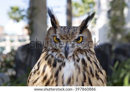 Bird owl The owl is a large bird belonging to the order of owls. - stock photo