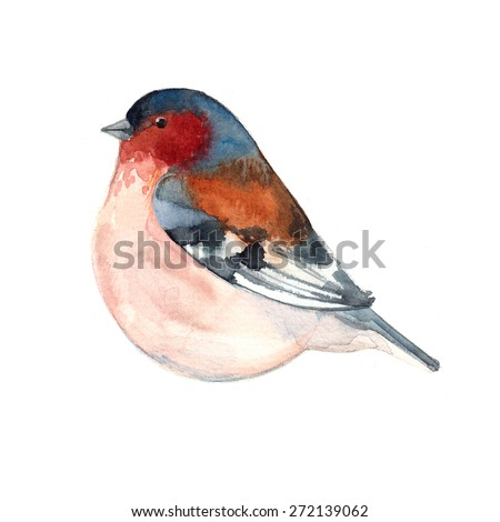 Bird painted on watercolor paper. Etude birds on a white background - stock photo