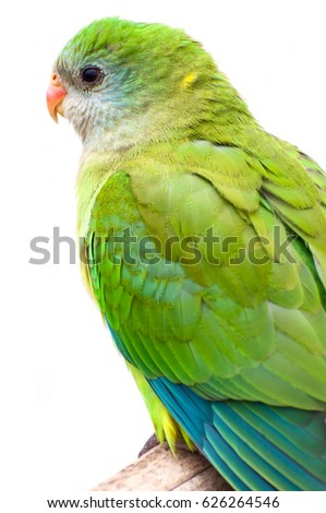 Bird parrot close-up sits on a branch isolated on white background
