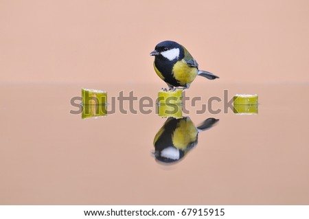Bird perched on a bamboo. - stock photo