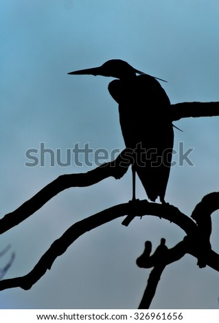 Bird resting on a tree in the delta - stock photo
