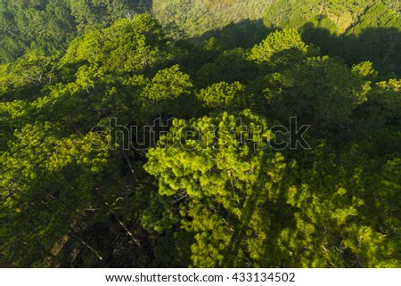 Bird's-eye view of pine forest