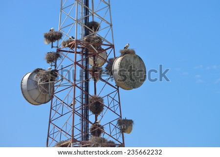 bird's nest and communications tower blue sky - stock photo