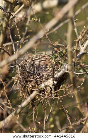 Bird's nest hidden in a tree