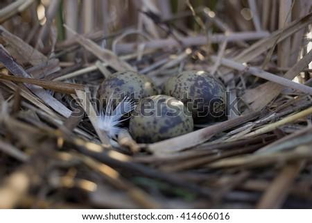 Bird's nest in natural habitat.  - stock photo