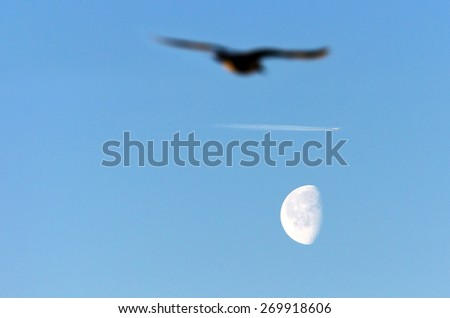Bird seagull on a background of the moon and the sky airplane contrail - stock photo