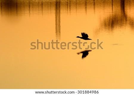 bird silhouette - stock photo