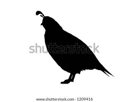 Bird Silhouette: Quail - stock photo