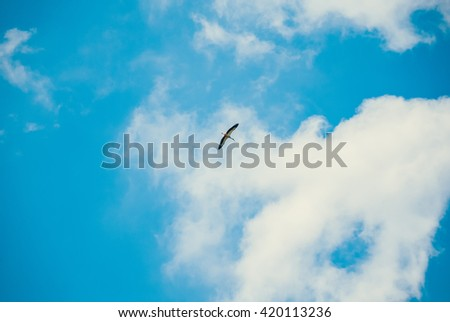 Bird soars freely in the sky - stock photo