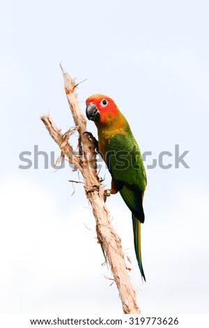 Bird,Sun conure parrot on the background of nature. - stock photo
