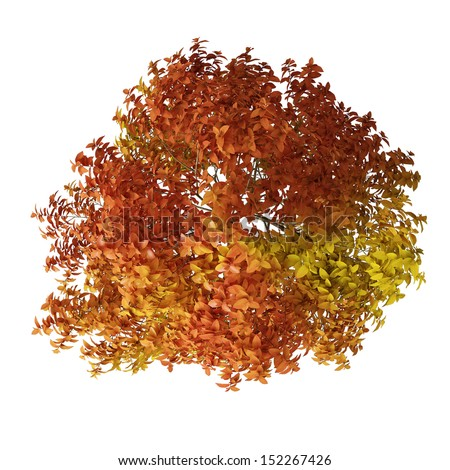 Bird Top View Autumn Tree Isolated On White - stock photo