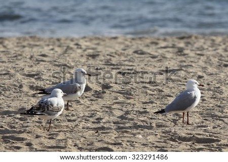 Bird walks along the beach, the birds were liberated symbol of freedom.