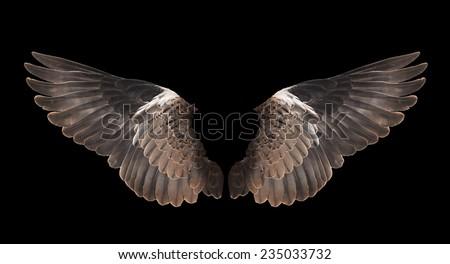 bird wing isolated on black background - stock photo
