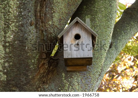 birdhouse in mossy tree with great bark and lichen textures.
