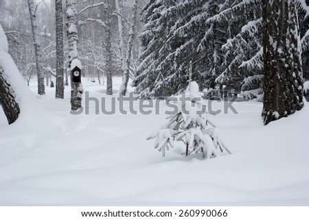Birdhouse in the winter forest photo for you - stock photo