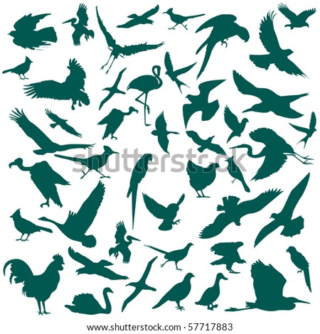 Birds - stock photo