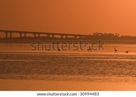 Birds and Bridge - St. Petersburg area - stock photo