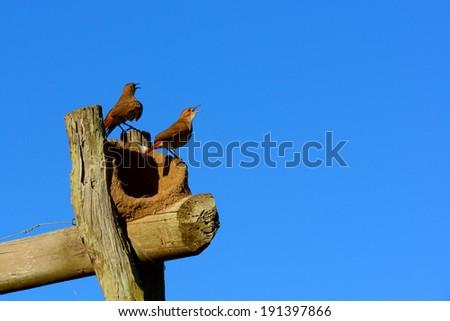 birds and nest - stock photo