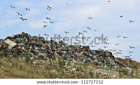 Birds and pollution Description: The seagulls on landfill
