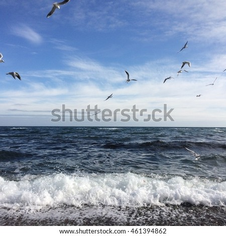 Birds and sea, amazing seascape