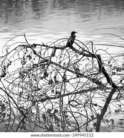 Birds and trees - stock photo