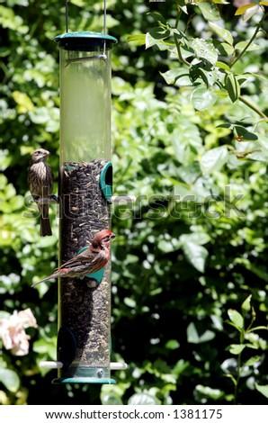Birds at the feeder. - stock photo