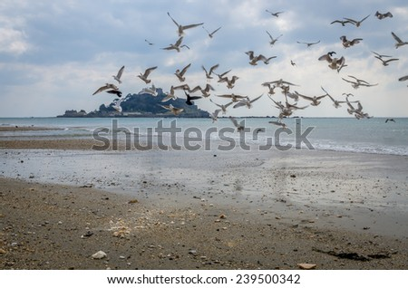 birds atet michaels mount