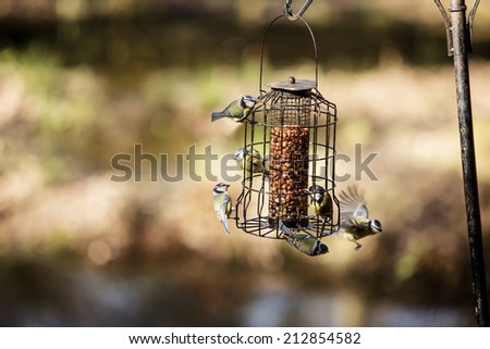 birds eating at a bird feeding set up in the woods - stock photo